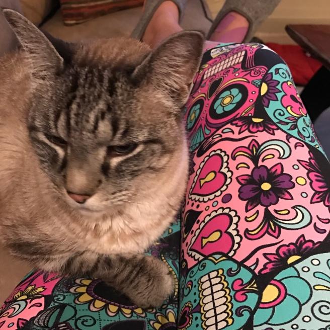 CuddleKitty-2017-02-09 18.46.24.jpg